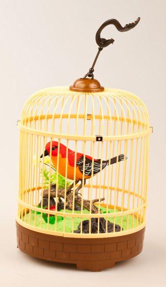 Животные певчие птицы щегол певчие